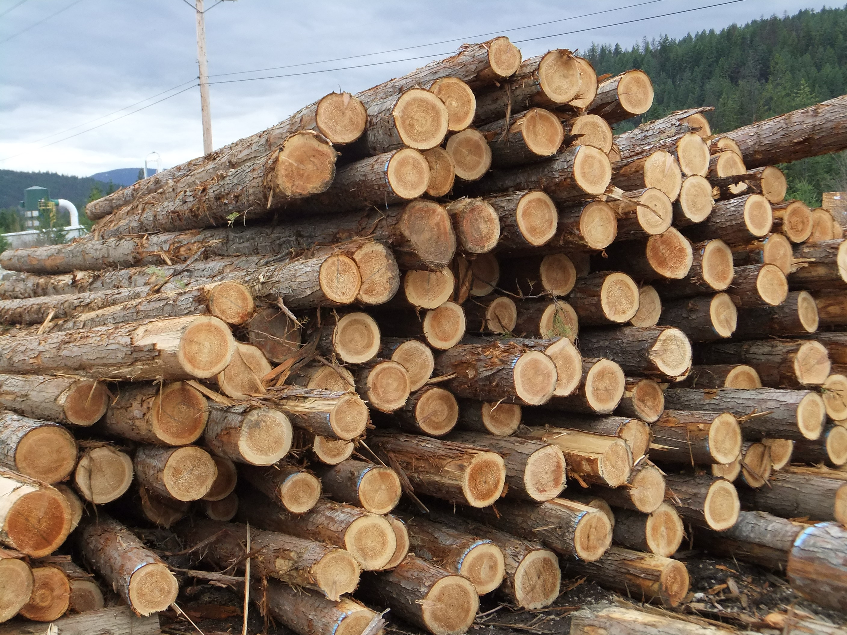 Fiber Supply Gold Island Forest Products